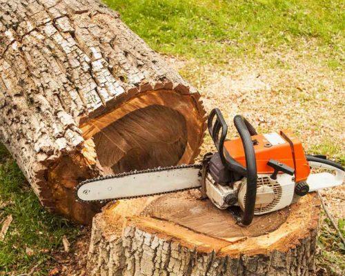 Tree-Removal-1024x720.jpg